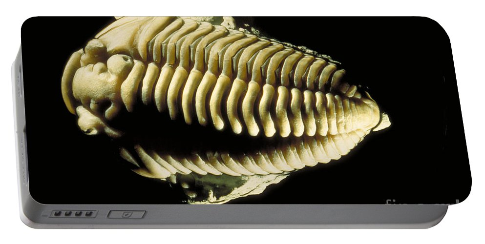 Animal Portable Battery Charger featuring the photograph Trilobite Fossil by Ted Kinsman