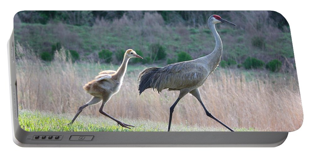 Bird Portable Battery Charger featuring the photograph Trying To Keep Up by Carol Groenen