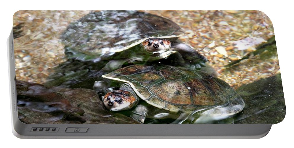 Turtle Portable Battery Charger featuring the photograph Turtle Two Turtle Love by J Vincent Scarpace