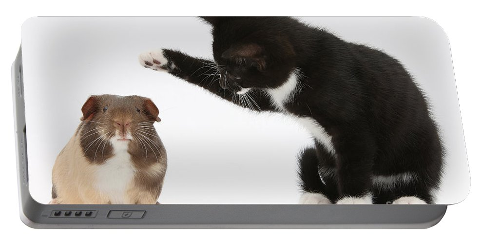 Nature Portable Battery Charger featuring the photograph Tuxedo Kitten With Guinea Pig by Mark Taylor