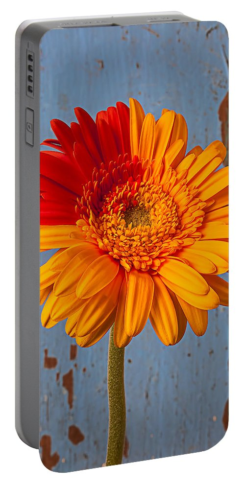 Gerbera Portable Battery Charger featuring the photograph Two Color Gerbera Daisy by Garry Gay