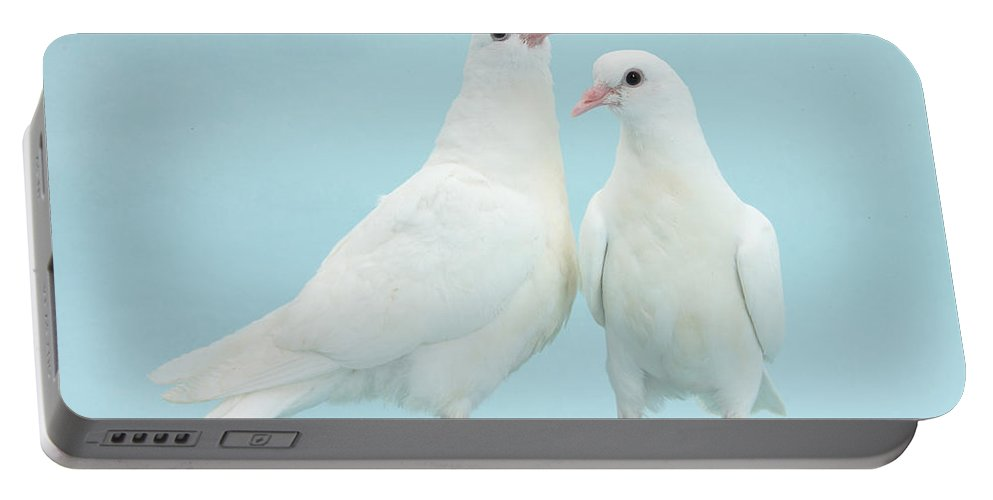 Nature Portable Battery Charger featuring the photograph Two Doves by Mark Taylor