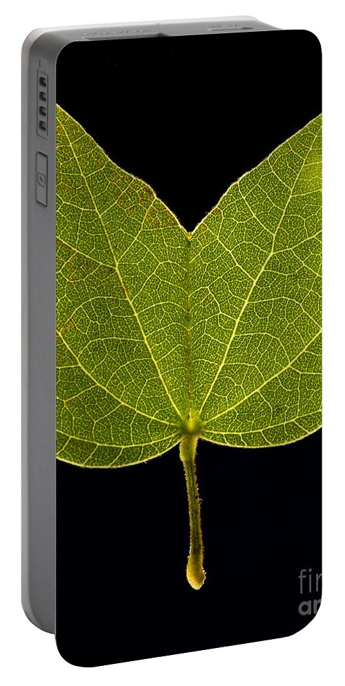 Leaf Portable Battery Charger featuring the photograph Two Lobed Leaf by Raul Gonzalez Perez