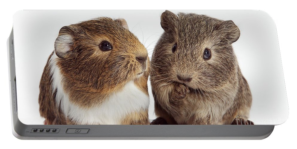 Nature Portable Battery Charger featuring the photograph Two Young Guinea Pigs by Mark Taylor