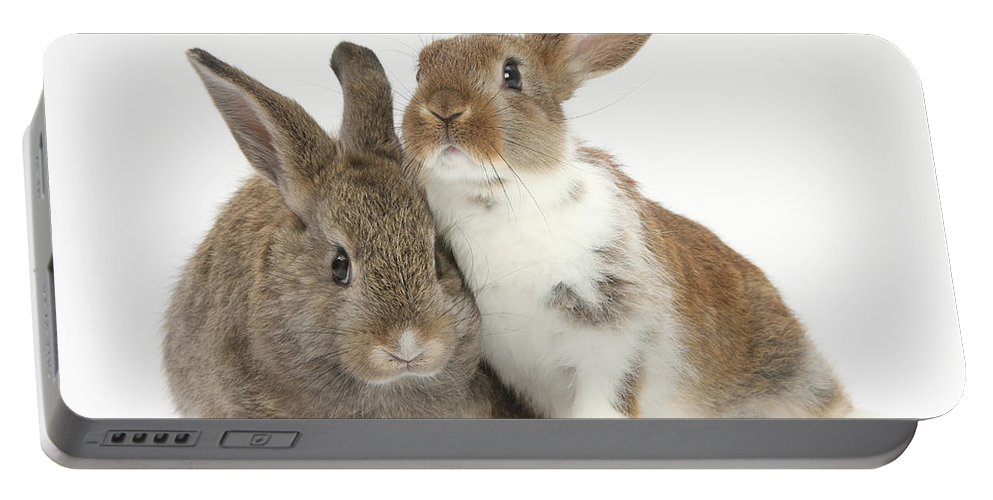 Animal Portable Battery Charger featuring the photograph Two Young Rabbits by Mark Taylor