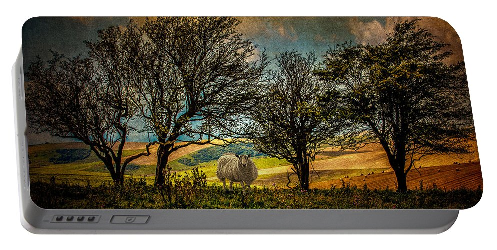 Sheep Portable Battery Charger featuring the photograph Up On The Sussex Downs In Autumn by Chris Lord