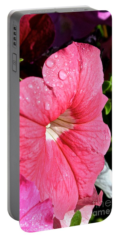 Plant Portable Battery Charger featuring the photograph Vibrant Petunias by Susan Herber