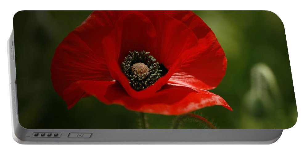 Orientale Portable Battery Charger featuring the photograph Vibrant Red Oriental Poppy Wildflower by Kathy Clark