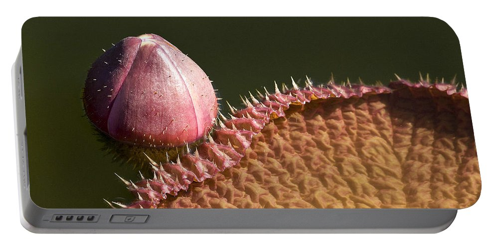 Victoria Portable Battery Charger featuring the photograph Victoria Amazonica Bud And Leaf by Heiko Koehrer-Wagner