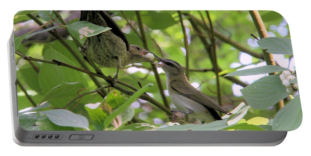 Brown-headed Cowbird Portable Battery Charger featuring the photograph Vireo And Cowbird by Doris Potter