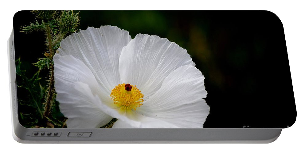Photograph Portable Battery Charger featuring the photograph Waiting For You by Vicki Pelham