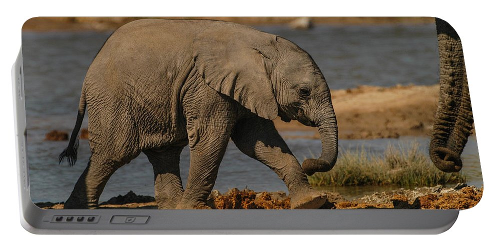 Focussed Portable Battery Charger featuring the photograph Walk This Way by Alistair Lyne