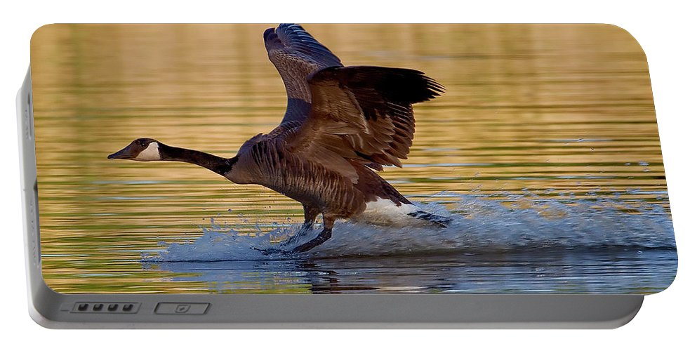 Species Branta Canadensis Portable Battery Charger featuring the photograph Water Landing by Bill Lindsay