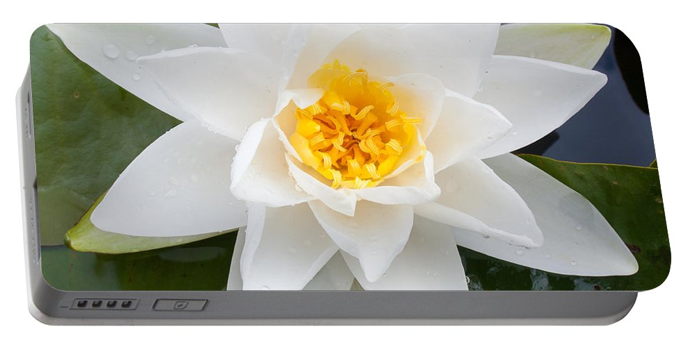 Asian Portable Battery Charger featuring the photograph Water Lily by Semmick Photo
