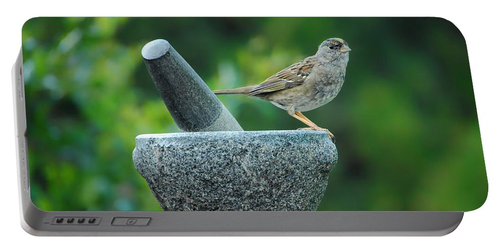 Sparrow Portable Battery Charger featuring the photograph Well Grounded by Donna Blackhall