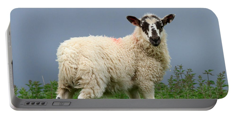 Lamb Portable Battery Charger featuring the photograph Wensleydale Lamb by Louise Heusinkveld