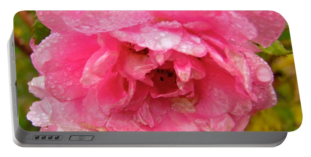 Rose Portable Battery Charger featuring the photograph Wet Rose by Stephanie Moore