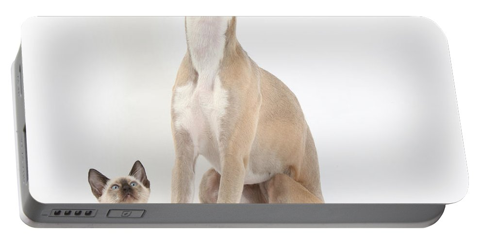 Dog Portable Battery Charger featuring the photograph Whippet & Siamese Kitten by Mark Taylor