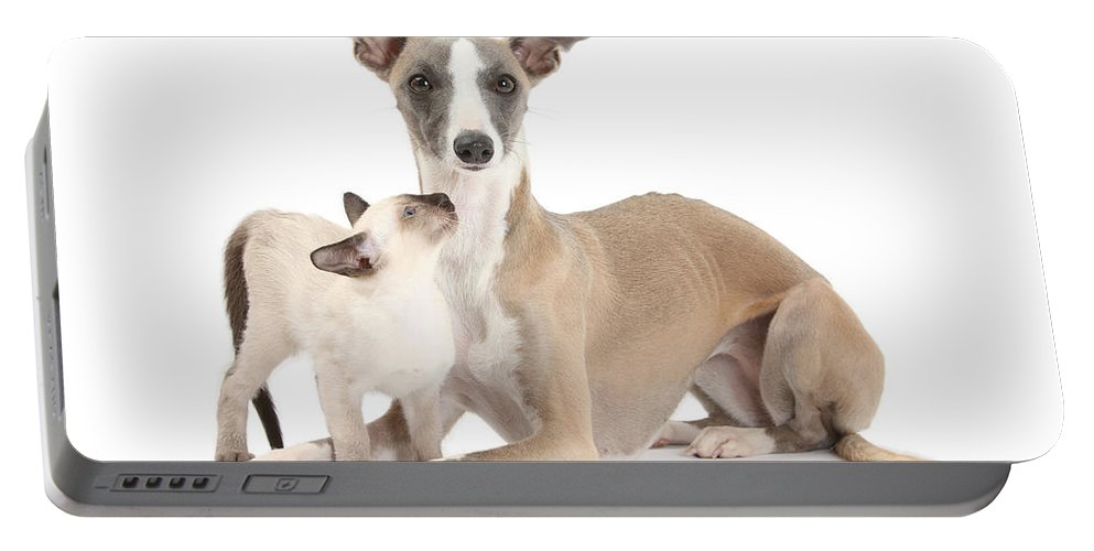 Animal Portable Battery Charger featuring the photograph Whippet And Siamese Kitten by Mark Taylor