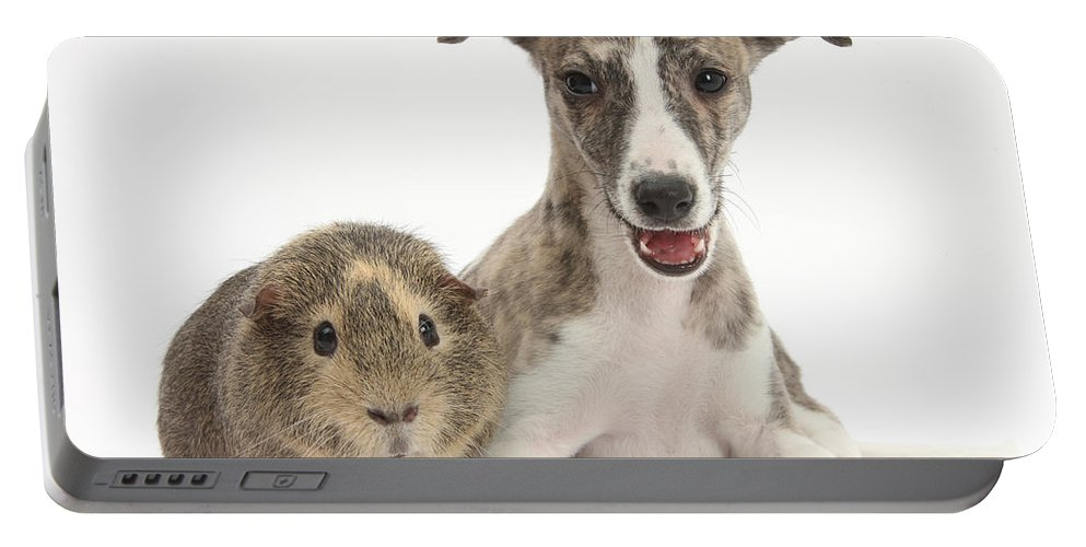 Nature Portable Battery Charger featuring the photograph Whippet Pup With Guinea Pig by Mark Taylor