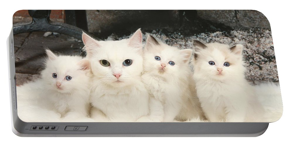 Animal Portable Battery Charger featuring the photograph White Cats by Mark Taylor