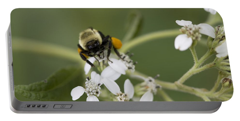 White Crownbeard Portable Battery Charger featuring the photograph White Crownbeard Wildflowers Pollinated By A Bumble Bee With His Bags Packed by Kathy Clark