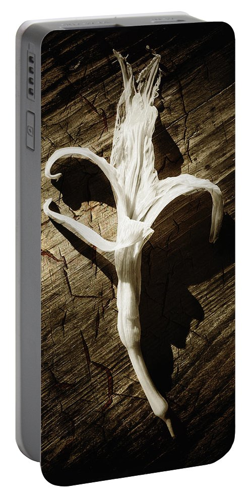 Age Portable Battery Charger featuring the photograph White Flower by Skip Nall