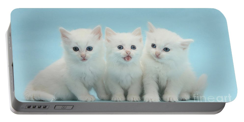 Animal Portable Battery Charger featuring the photograph White Kittens by Mark Taylor