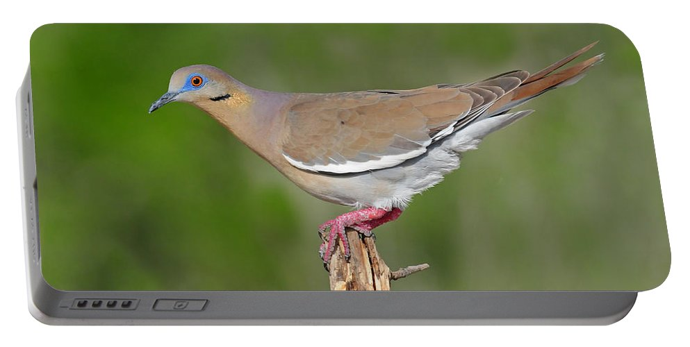White Winged Dove Portable Battery Charger featuring the photograph White Winged Dove by Dave Mills