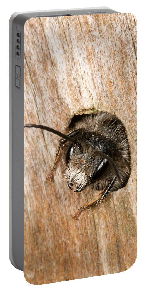 Andrena Portable Battery Charger featuring the photograph Who Goes There by Bob Kemp