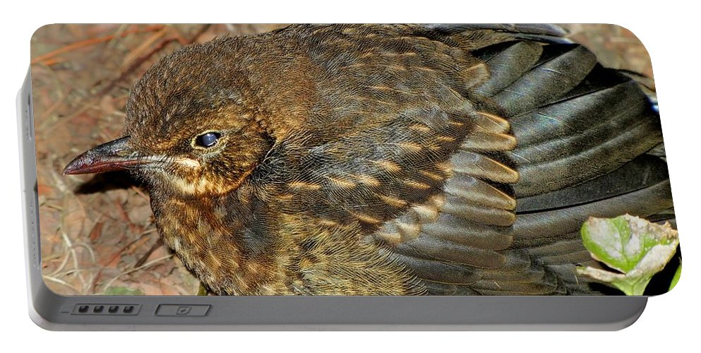 Wild Bird Portable Battery Charger featuring the photograph Wild Bird by Mariola Bitner