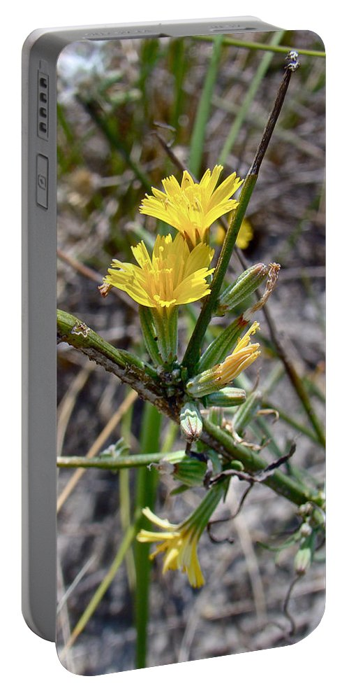 Wild Lettuce Portable Battery Charger featuring the photograph Wild Lettuce - Lactuca Virosa by Mother Nature