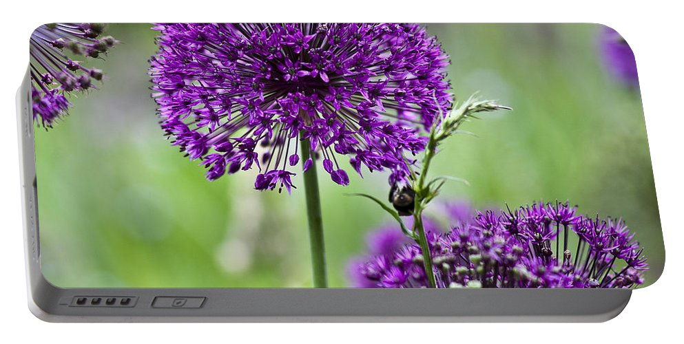 Allium Portable Battery Charger featuring the photograph Wild Onion Flower by Heiko Koehrer-Wagner