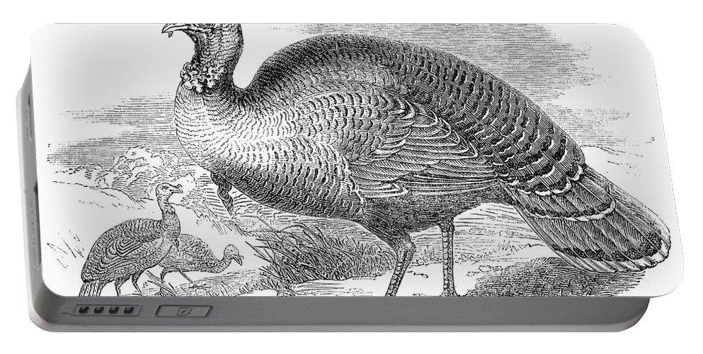 1853 Portable Battery Charger featuring the photograph Wild Turkey, 1853 by Granger