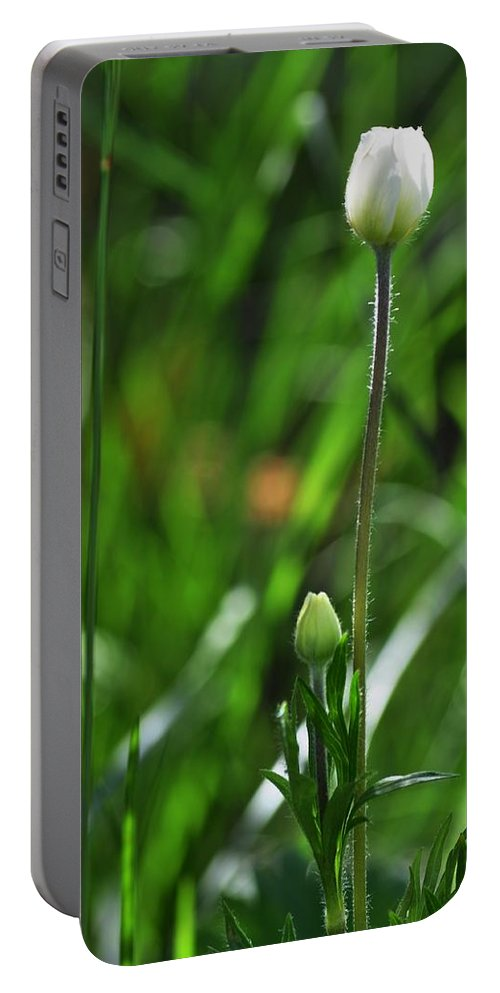 Wildflower Portable Battery Charger featuring the photograph Wildflower1 by Fran Riley