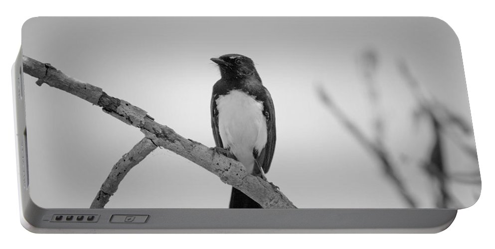 Willie Wagtail Portable Battery Charger featuring the photograph Willie Wagtail V2 by Douglas Barnard