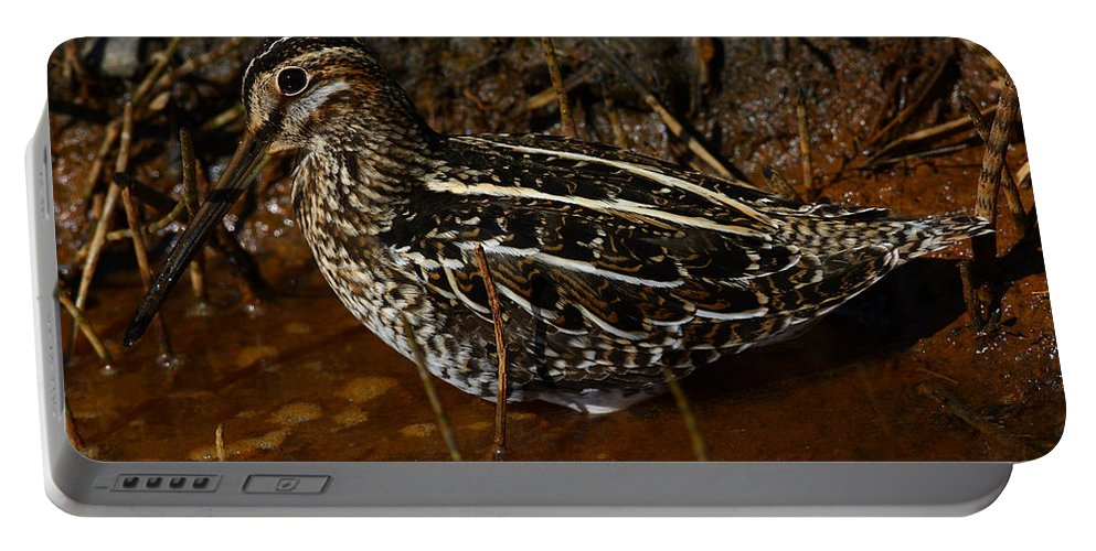 Doug Lloyd Portable Battery Charger featuring the photograph Wilsons Snipe by Doug Lloyd