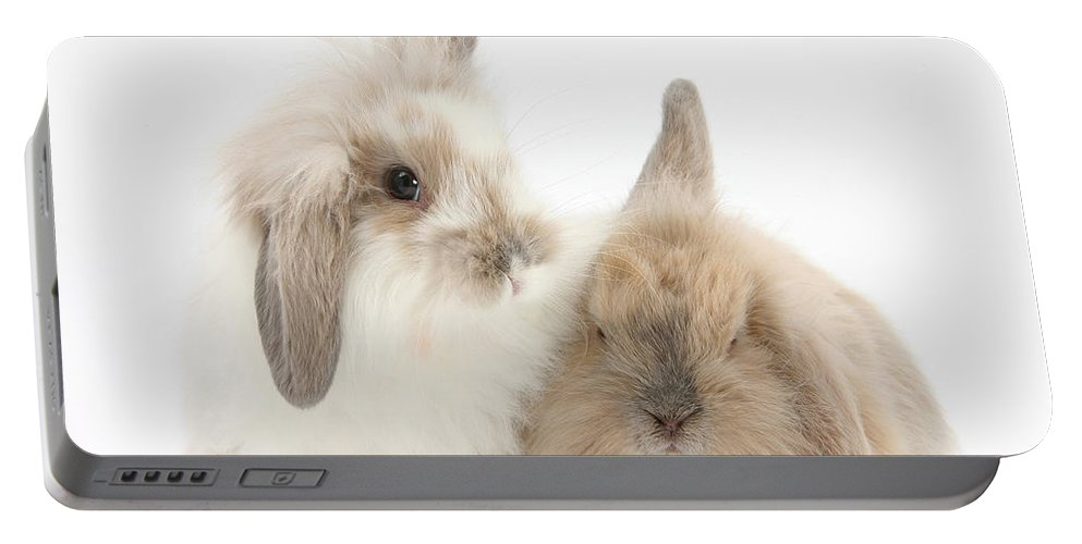 Animal Portable Battery Charger featuring the photograph Windmill-eared Rabbits by Mark Taylor