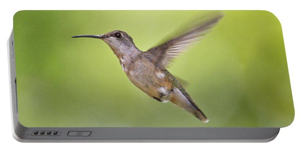 Hummingbird Portable Battery Charger featuring the photograph Winging It by Betsy Knapp