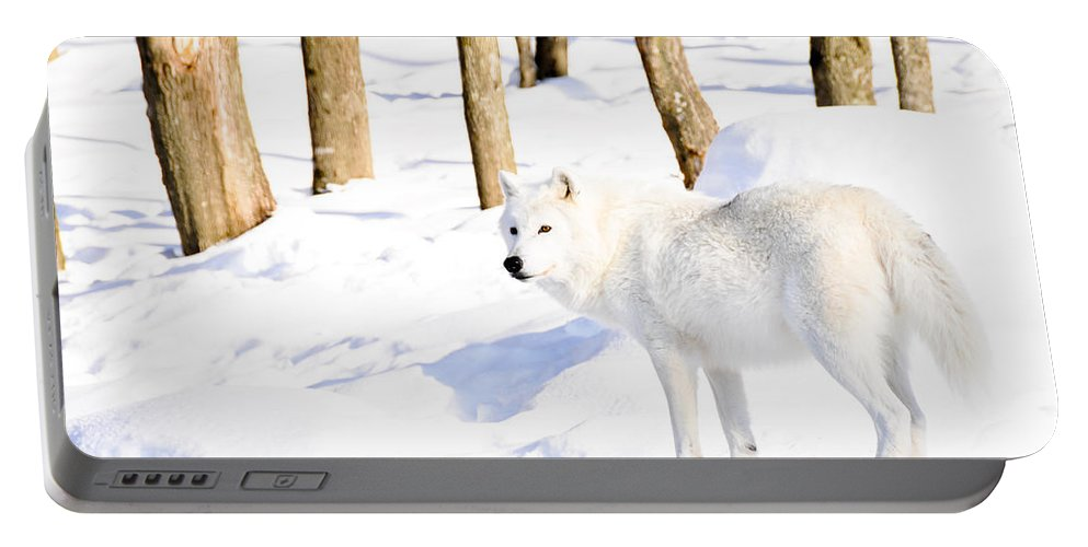 Arctic Wolf Portable Battery Charger featuring the photograph Winter Wolf by Cheryl Baxter