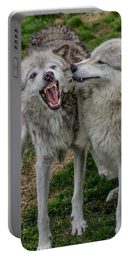 Fangs Portable Battery Charger featuring the photograph Wolf Confab by Greg Nyquist