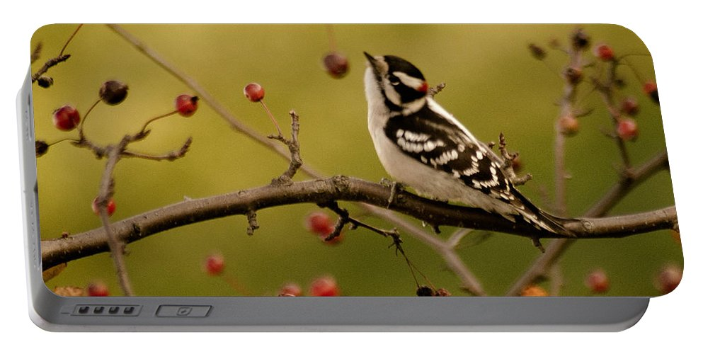 Woodpecker Portable Battery Charger featuring the photograph Woody by Trish Tritz