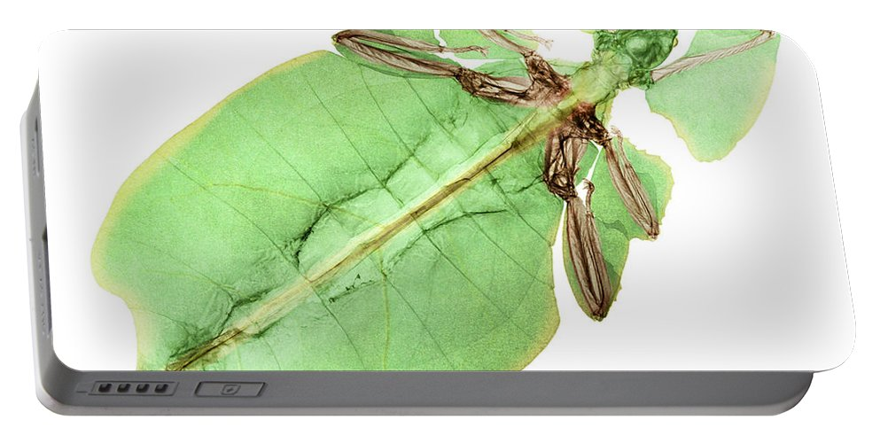 Giant Leaf Insect Portable Battery Charger featuring the photograph X-ray Of A Giant Leaf Insect by Ted Kinsman