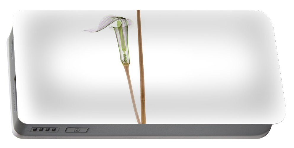 Plant Portable Battery Charger featuring the photograph X-ray Of Jack-in-the-pulpit by Ted Kinsman