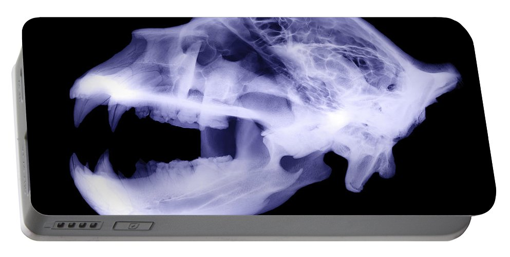 Kodiak Bear Portable Battery Charger featuring the photograph X-ray Of Kodiak Bear Skull by Ted Kinsman