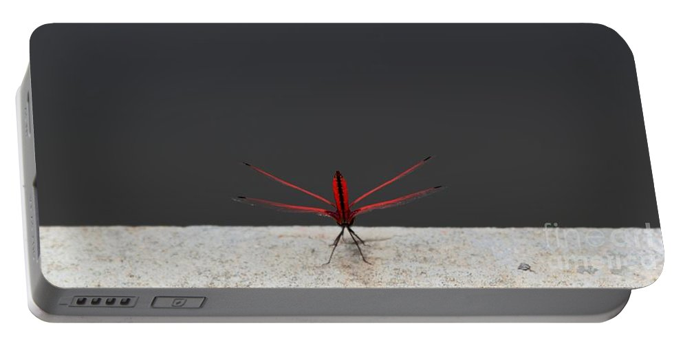 Dragonfly Portable Battery Charger featuring the photograph X Wing Dragonfly by Nola Lee Kelsey