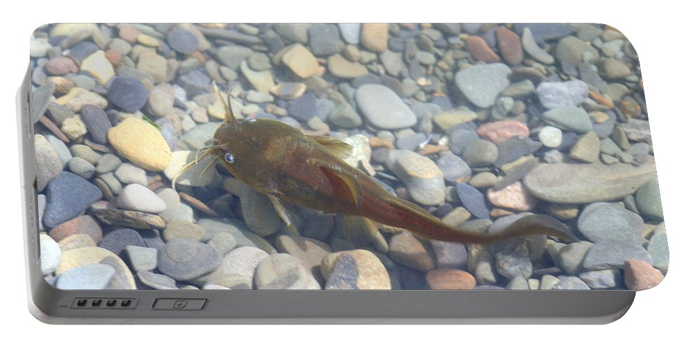 Animal Portable Battery Charger featuring the photograph Yellow Bullhead by Ted Kinsman