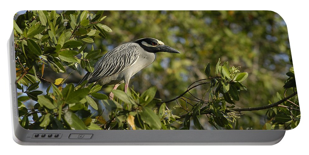 Aves Portable Battery Charger featuring the photograph Yellow-crowned Night Heron by Raul Gonzalez Perez