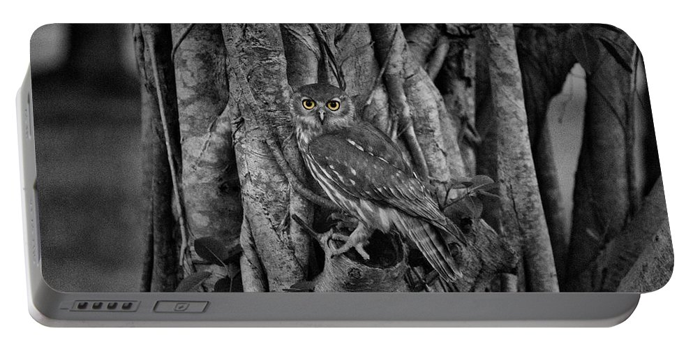 Barking Owl Portable Battery Charger featuring the photograph Yellow Eyes by Douglas Barnard