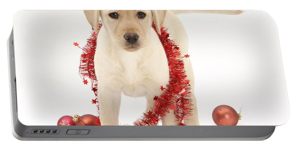 Animal Portable Battery Charger featuring the photograph Yellow Lab Pup At Christmas by Mark Taylor